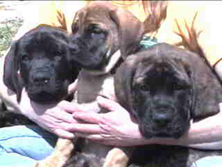 Eastwind Puppies