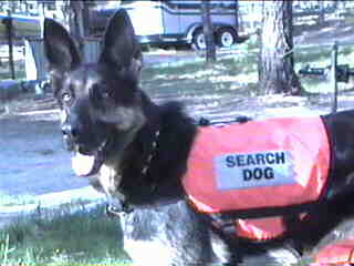 Marley Search and Rescue