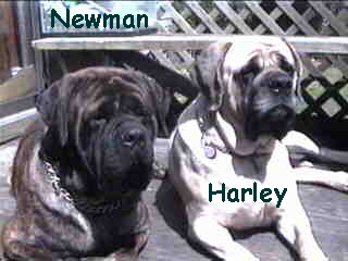 Alfred E. Newman with Harley