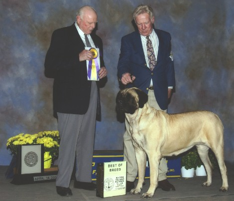 Ch Lola taking Best of Breed on April 14, 2002